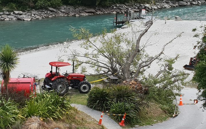 The tree which fell at the Shotover Jet base in Queenstown.