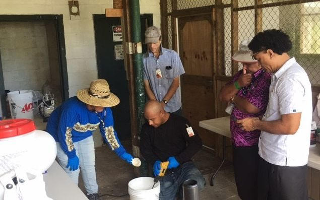 Officials from Samoa were in American Samoa in February 2019 to find out about the local infestation of the invasive little fire ant and discuss strategies to contain the pest.