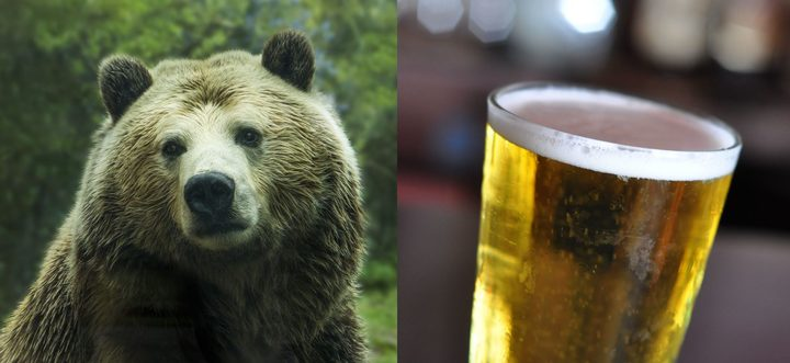 A bear and a pint of bear. When a New Zealander says they want a 'bear', do they mean the animal or the drink?