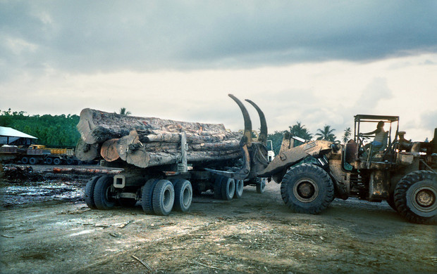 Logging operations in Solomon Islands