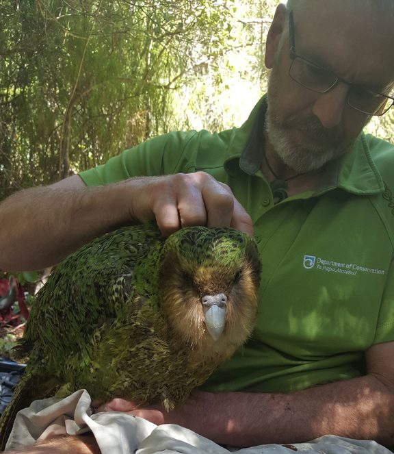 Daryl Eason with a male kakapo named Wolf.