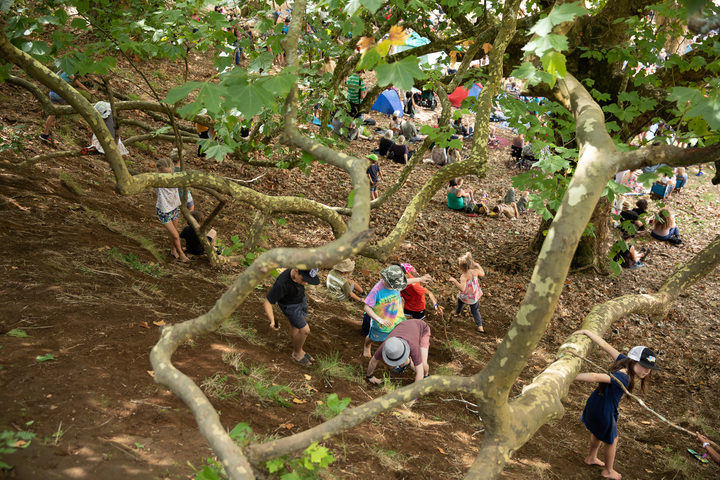 The huge liquidambar tree near the main stage is alaways a popular place for the kids of WOMAD to play.