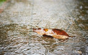 Heavy rain - fallen leaf on the sidewalk