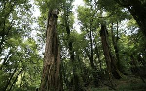 John Key said people will consider Labour barking mad for voting to leave timber to rot.