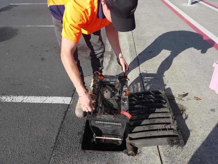 Cain Grogan from Stormwater360 pulls up a trap that caught plastic, cigarette butts, wrappers, polystyrene out of the drain.