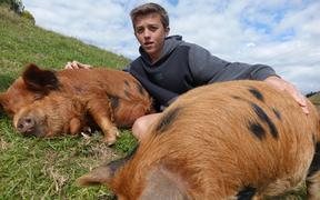 George, 14, adopted the two kunekune and named them Peggy and Sue.