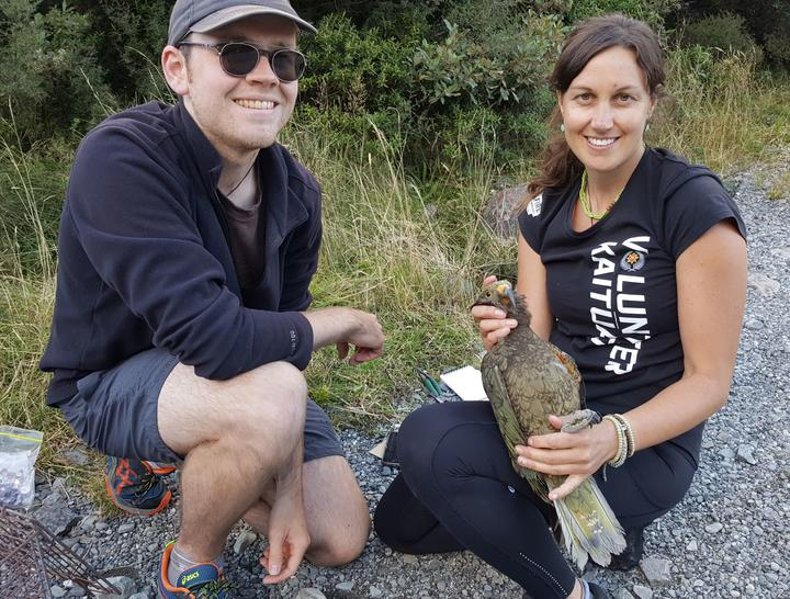 George Moon and Laura Young, from the Kea Conservation Trust, after banding a young kea with a plastic leg band that reads Black B on Yellow. The kea has been named Whakamatemate or curiosity.