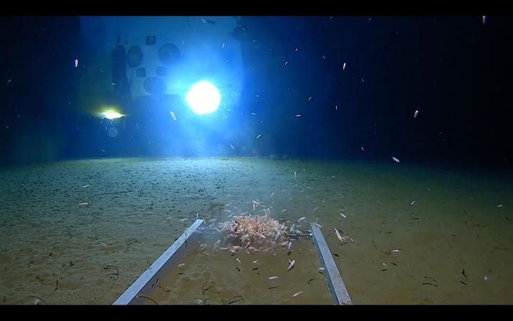 Deepest-ever sub dive finds plastic bag at 36000 ft deep