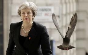 FILE - In this Monday, April 23, 2018 file photo a pigeon takes off as Britain's Prime Minister Theresa May arrives