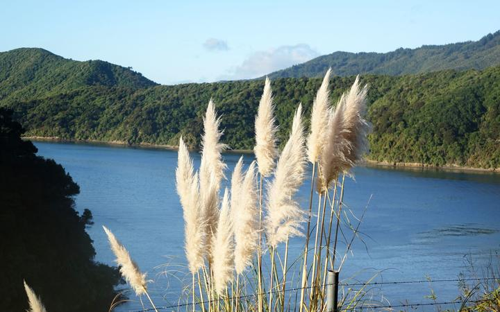 Queen Charlotte Sound of the Marlborough Sounds