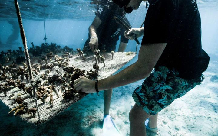 A pair of Mo'orea Coral Gardeners tend to one of their underwater coral nursery tables.