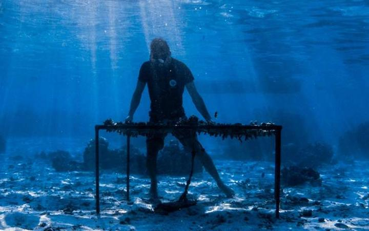 A Moorea Coral Gardener tends to one of their coral nurseries.