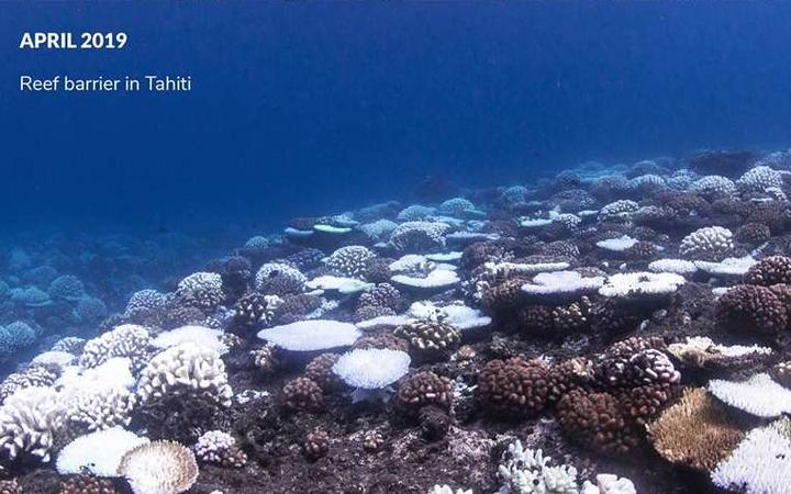 Barren Underworld Coral Bleaching And The Perilous