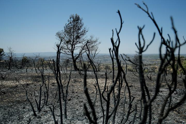 Burned trees are pictured near Flix on June 28, 2019 as a forest fire raged out of control in the northeastern region of Catalonia