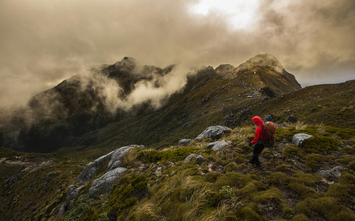 A tramper in the Paparoa Range, above Westport, walks between the the Paparoa Wilderness Area and an area of stewardship land. Conservation land makes up about 84 percent of the West Coast's total area.