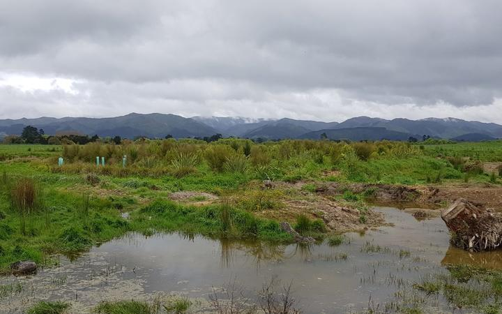 The wetlands where the fish were relocated to.