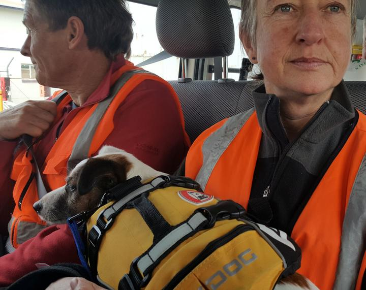 Dog handler Sandy King says it is convenient to have small dog that can travel on her lap. Gadget is wearing a life jacket with a handy handle.