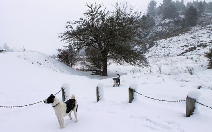 Dogs in the snow near Lawrence in the Clutha District this week.