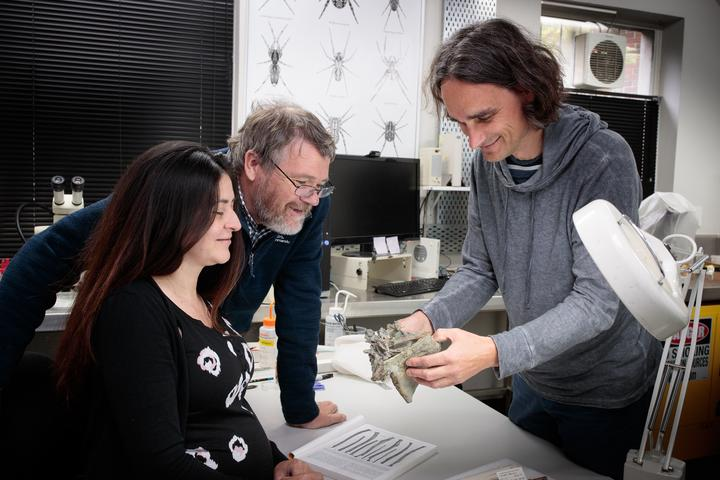 Drs Vanesa De Pietri, Paul Scofield and Gerald Mayr examine a Crossvallia waiparensis fossil at Canterbury Museum.