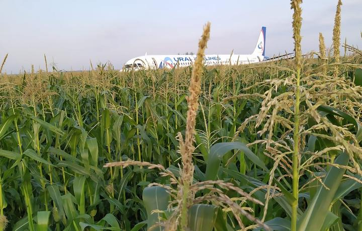 In this handout photo released by Russian Emergency Situations Ministry, the Airbus A321 plane, which made a hard landing in a corn field near Zhukovsky Airport, in Moscow region, Russia.
