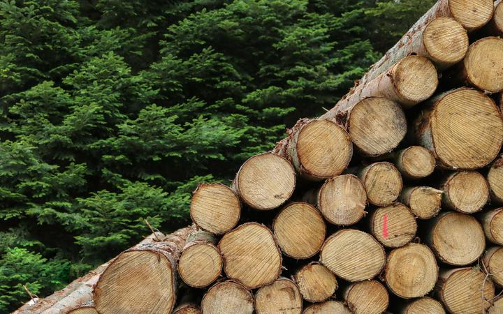 Logs timber wood