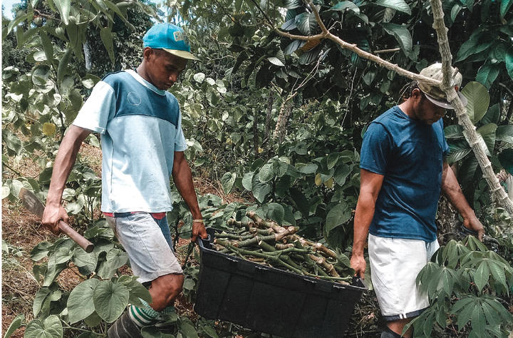 FijiKava has more than 200 growers working with them across the country.
