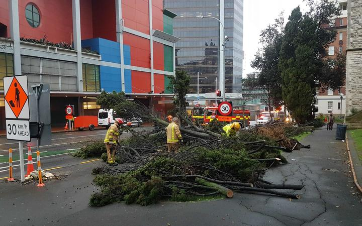The fallen tree on Wellesley Street in central Auckland is being cleared away.