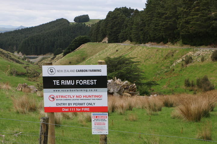Former Te Rimu Station in the Tararua district has been purchased by New Zealand Carbon Farming and converted to forestry