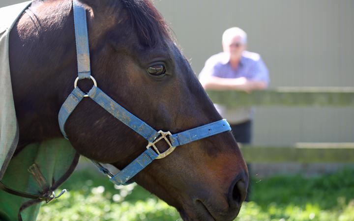 Alasdair Robertson looks on at the Awapuni stables.