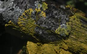 "Physarum Polycephalum better known as a ""Blob"", an unicellular organism neither plant, mushroom nor animal and capable of learning despite its lack of neuron pictured in the Paris zoo"