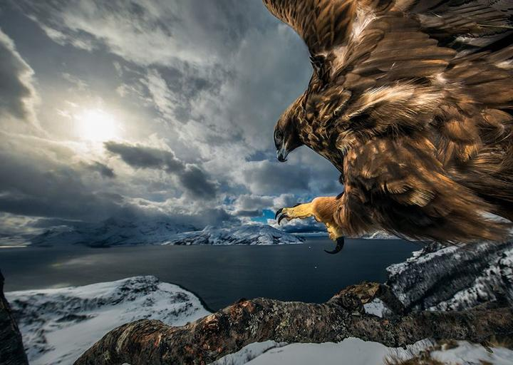 Land of the eagle by Audun Rikardsen, Norway. 2019 Wildlife Photographer of the Year section winner.
