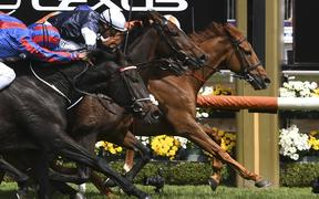 Jockey Craig Williams onboard Vow and Declare wins the Melbourne Cup horse race.