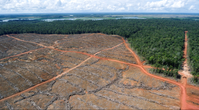 Deforestation in Indonesian-ruled West Papua.