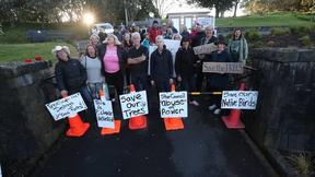 30 people have gathered to block the entrance to Mt Albert in an effort to save trees.