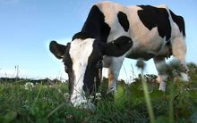 LIC escapes regulations imposed when it controlled dairy herd testing.