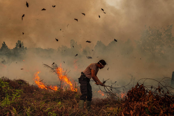 During Indonesia's annual dry season, hundreds of fires are often illegally ignited to clear forests in the islands of Sumatra and Kalimantan, where large forest concessions are used by pulp and paper and palm oil companies.