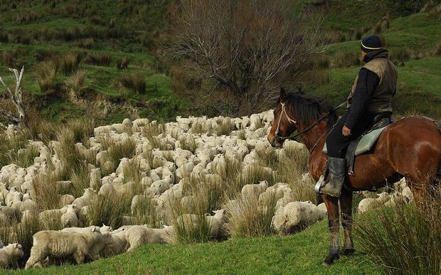 The Federation of Maori Authorities (FoMA) and Beef + Lamb New Zealand have created two new jobs, which focus on helping support Maori farmers.