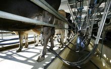 Dairy farm visits by MBIE labour inspectors have revealed further cases of poor record-keeping in New Zealand.
