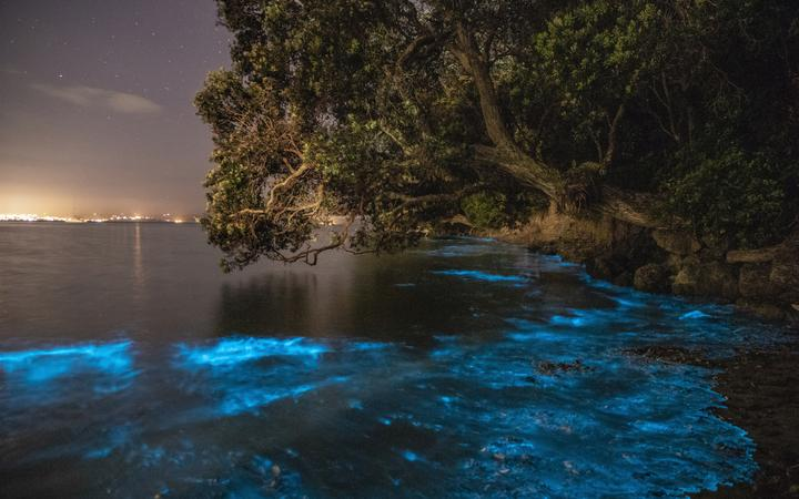 Bioluminescence in Tindalls Bay, Auckland.