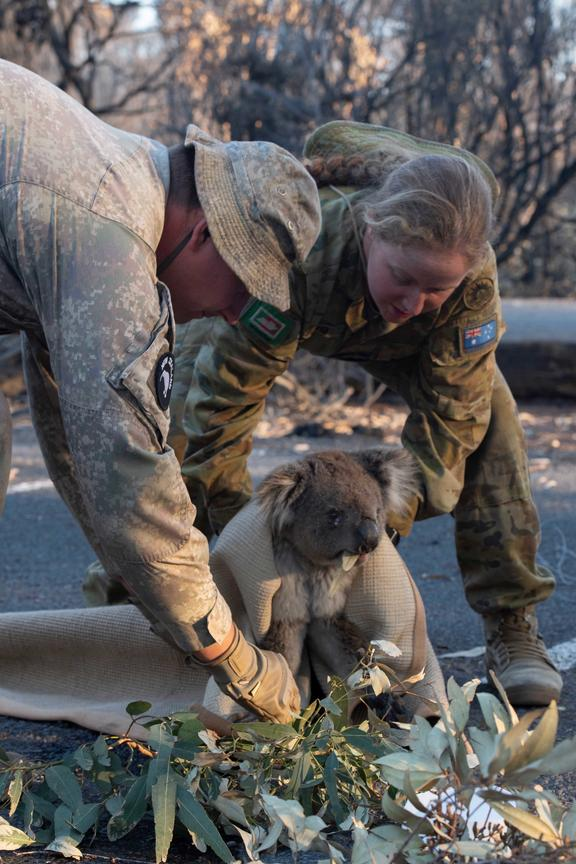 LCPL Schroder and LT Pinheiro help rescue a koala in Findlers Chase National Park.