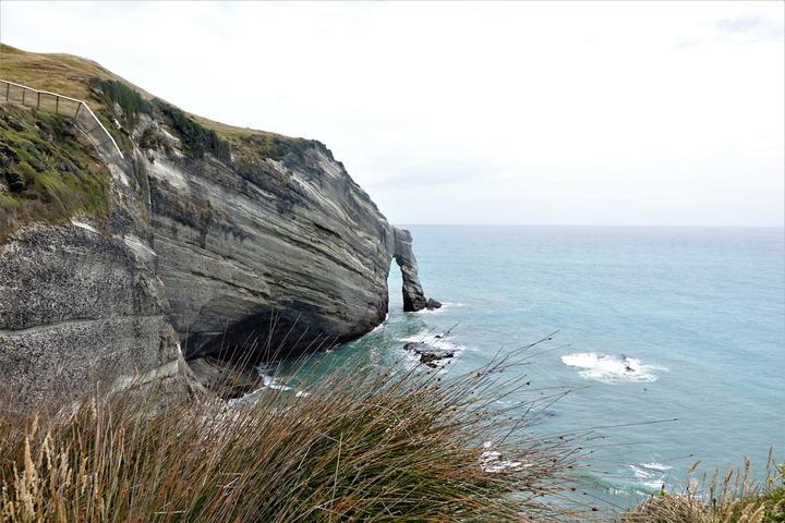 The sea cliffs below the sanctuary and part of the predator fence built into the cliff.