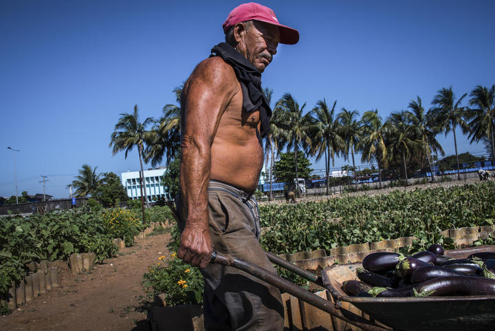 A farmer works at a suburban agriculture farm in Cerro Municipality in Havana, 2017.