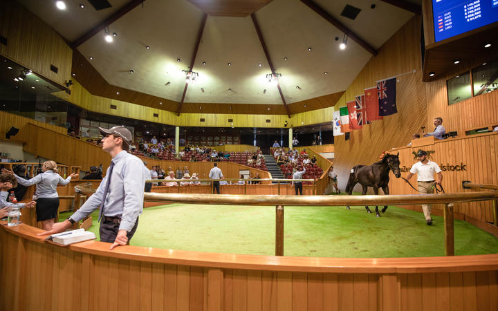 General imagery from the Day 3 of Book 1 the Karaka 2020 Yearling Sales