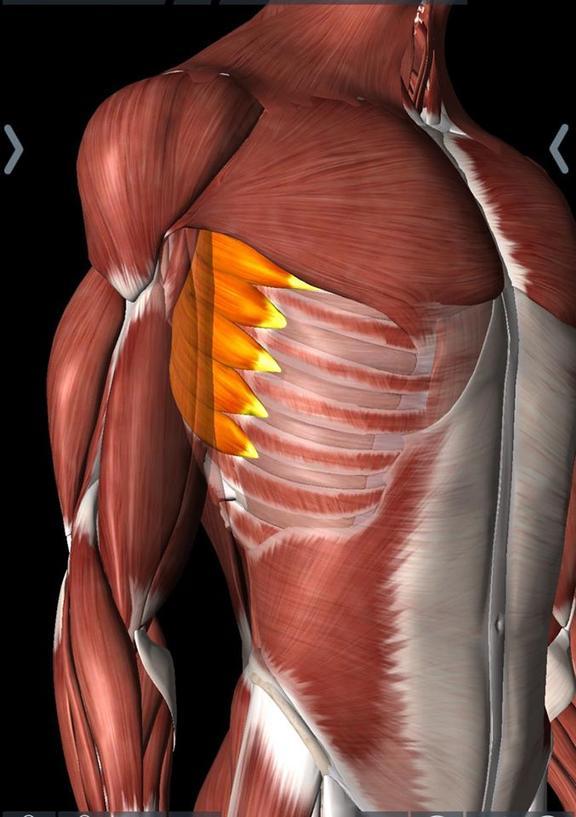 Pita Taufatofua tore his serratus muscles, causing sharp pain along the side and lower ribs.
