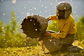 Hatidze Muratova, one of Europe's last wild beekeepers, in the film Honeyland.