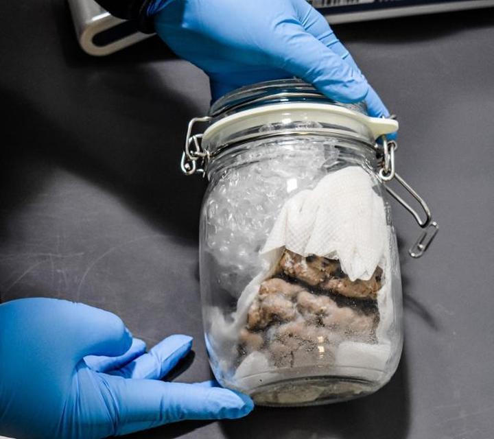 Human brain found inside mail truck near US-Canada border