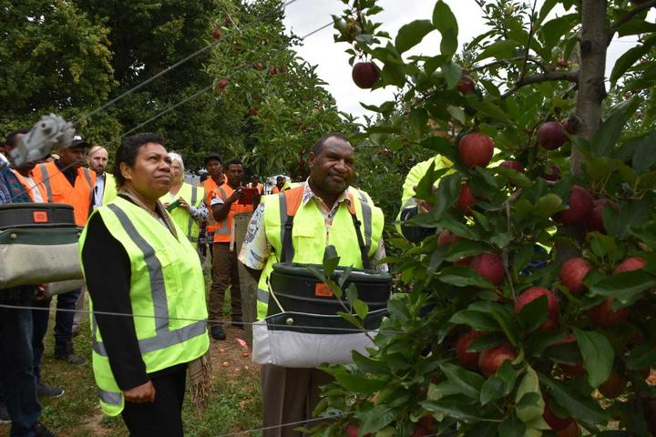 PNG prime minister James Marape and wife Rachael at T&G apple orchard in Hawke's Bay, New Zealand, trying out some fruit picking in the company of PNG RSE workers.