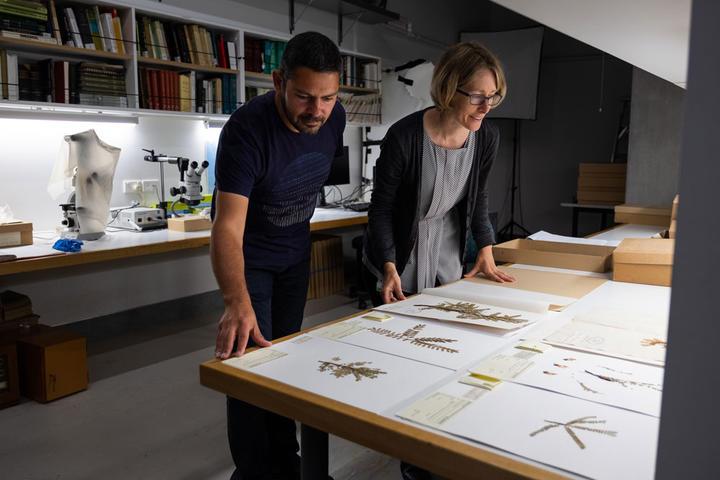 Te Papa Genetic Scientist Lara Shepherd and Botanist Carlos Lehnebach