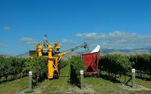 The wine industry has confirmed a record grape harvest this year.