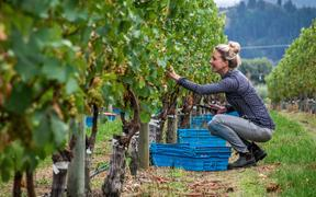 A Marlborough wine maker, Sophie Parker-Thomson is about to become one of only a few hundred Masters of Wine in the world, and one of a handful in New Zealand.